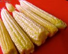 The Truth About Baby Corn and Where It Comes From