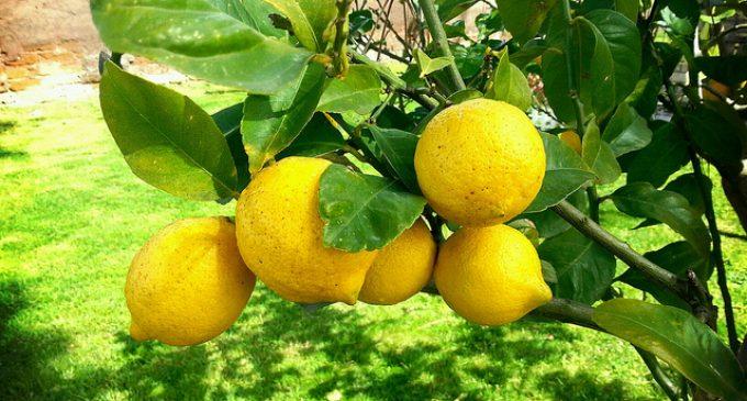 How To Keep Lemons Fresher Longer