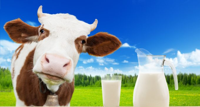 Not All Organic Milk Is Really Organic…Find Out the Shocking Reason Why!