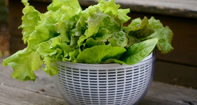 Save Time In The Kitchen: The Fastest Methods For Drying Lettuce Without Wasting Paper Towels